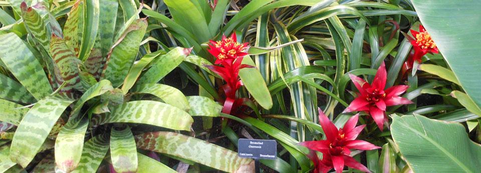flowers bromeliads 4 myriad-960x346